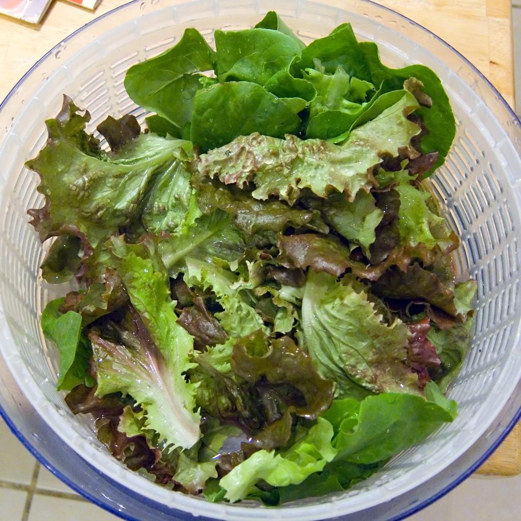 Nella foto si vede il cestello di una centrifuga da insalata con foglie di vario tipo di lattuga