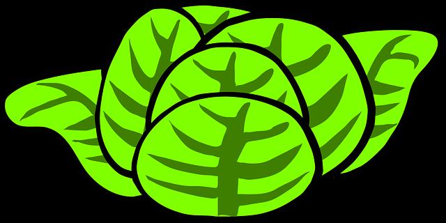 illustrazione di un cespo di lattuga
