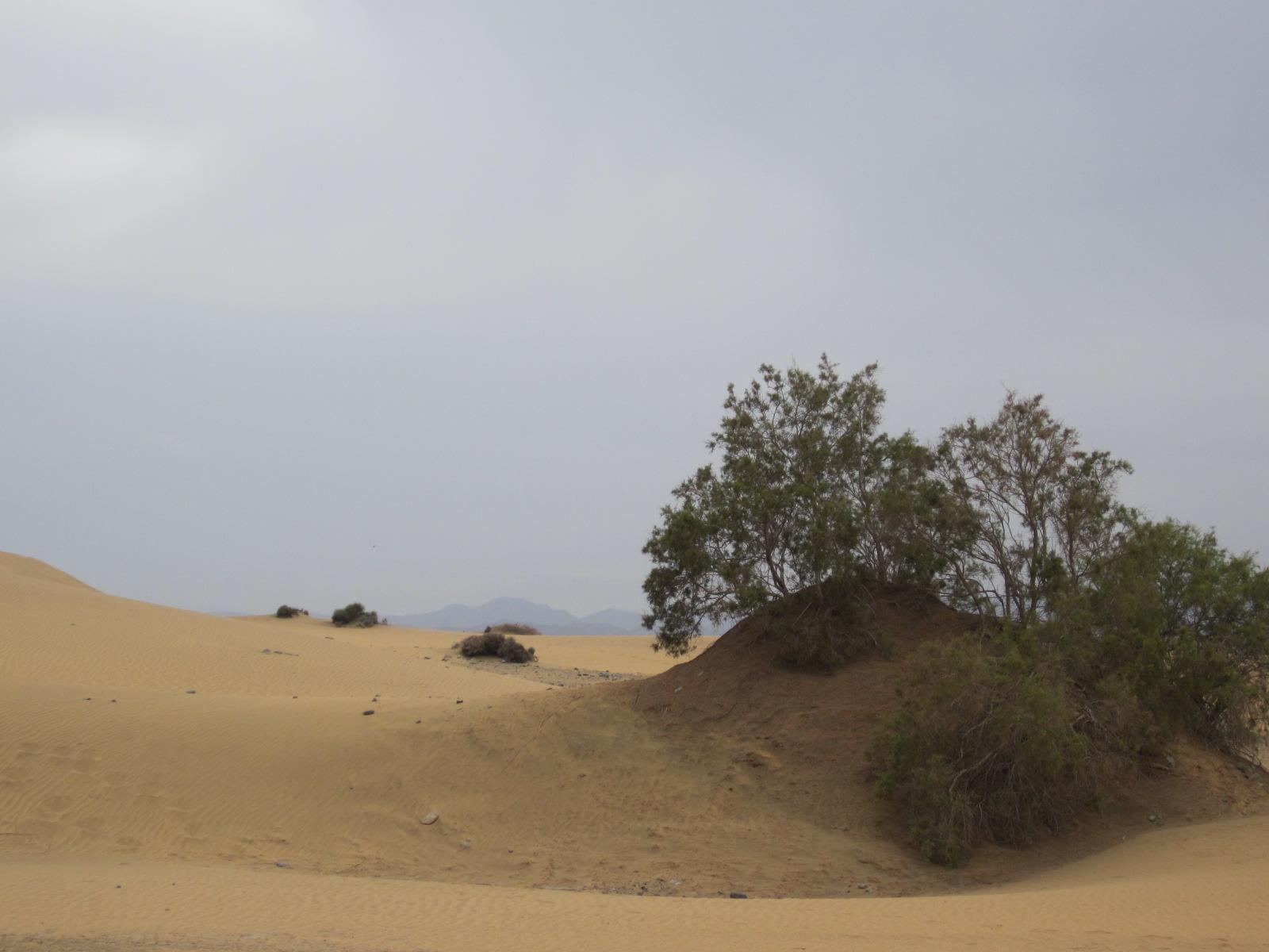 Paesaggio con dune a Maspalomas