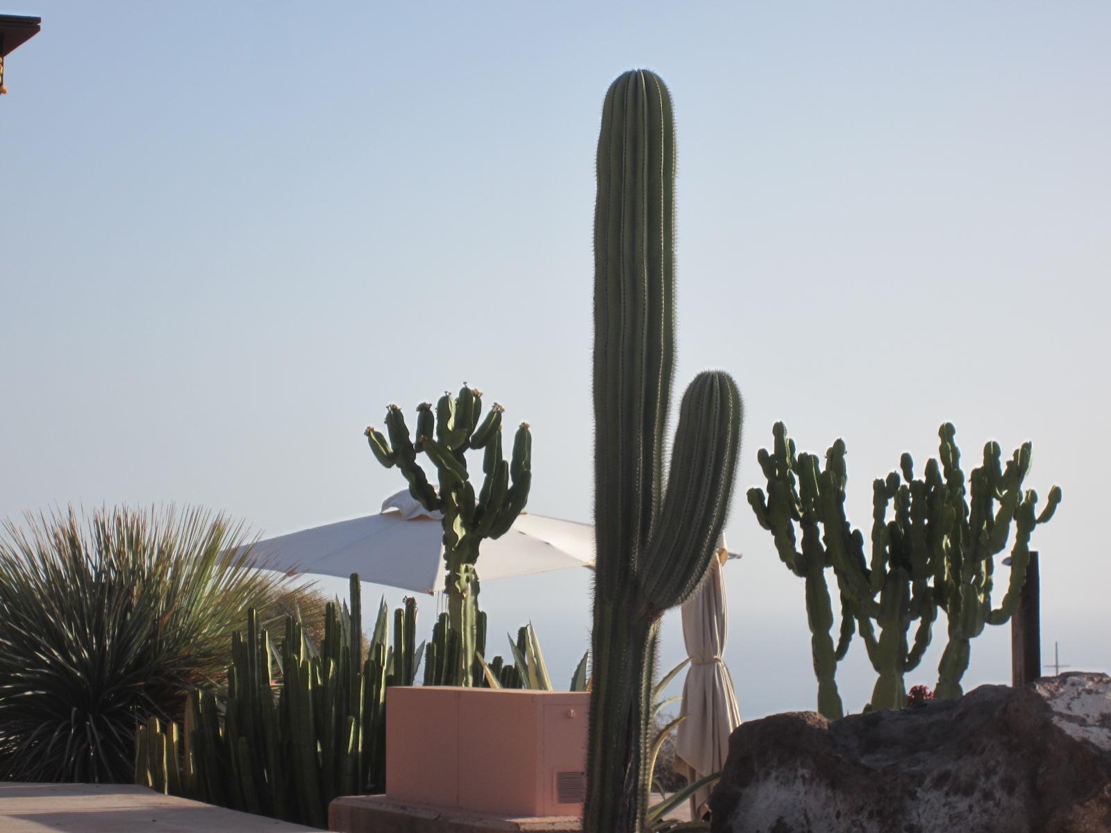 Cactus e altre piante succulente