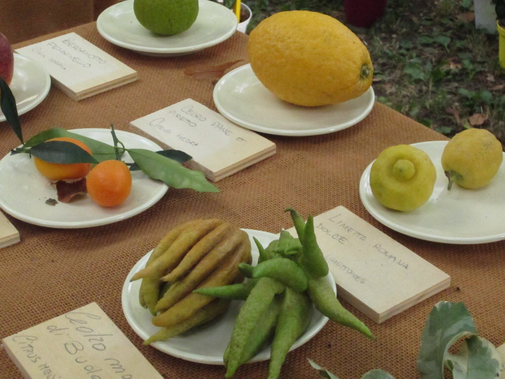 Visione d'insieme di agrumi a Murabilia