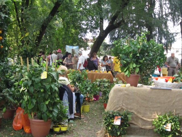 Stand di vendita di agrumi a Murabilia