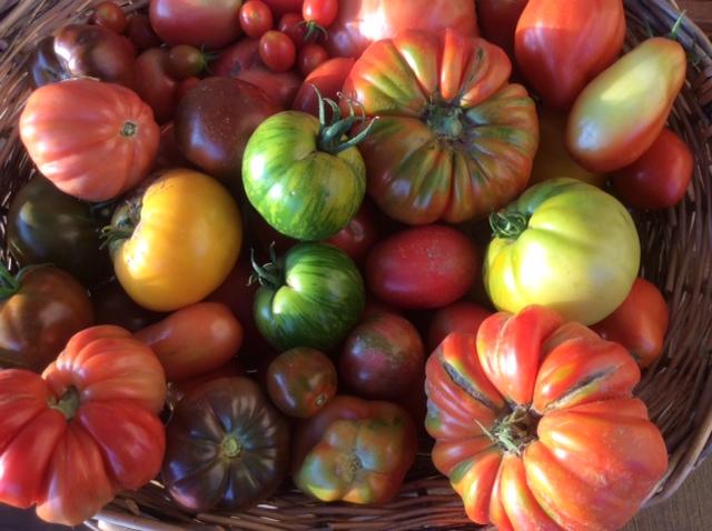 Pomodori di vari colori