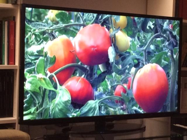 pomodori in programma televisivo