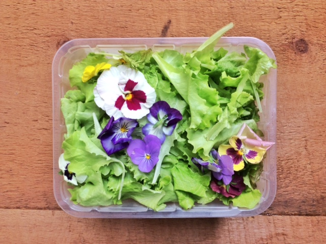 foglie di lattughino e fiori in vaschetta di plastica
