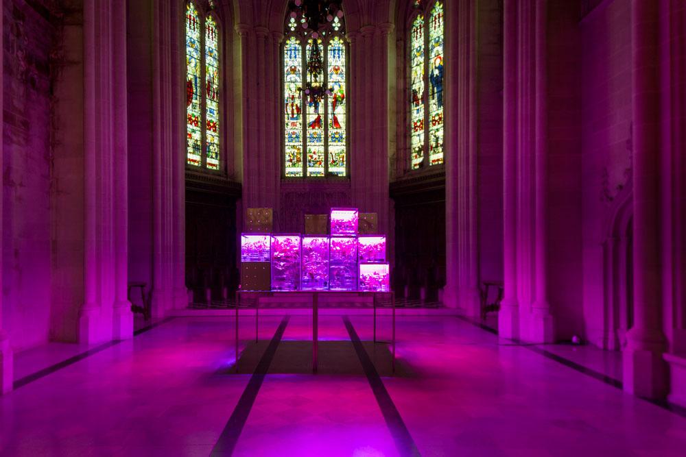 L'installazione creata da Suzanne Anker nella cattedrale Saint John the Divine