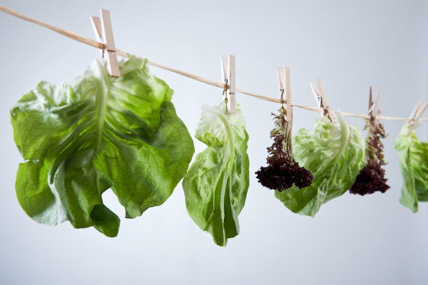 foglie di insalata stese ad asciugare