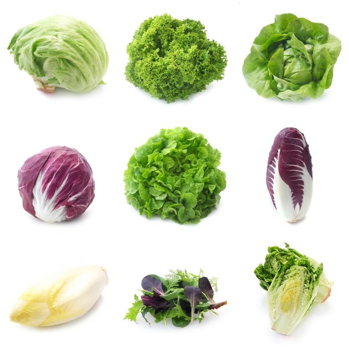 vari tipi di foglie da insalata