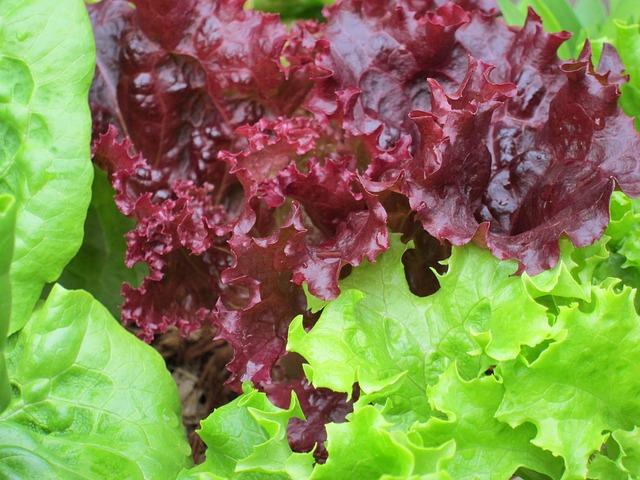 foglie da insalata fresche seguendo i corretti consigli